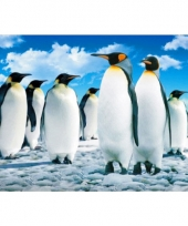 Dieren placemats pinguins