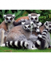 Dieren placemats ring tailed lemur