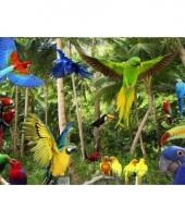 Dieren placemats vogels