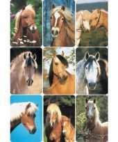 Dieren stickers paardenhoofd rassen 3 stuks