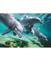 Dolfijntjes poster 61 x 92 cm