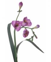 Freesia tak met paarse bloemen 57 cm