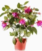 Fuchsiaplant in pot 30 cm fuchsia