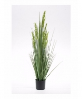 Gras nepplant in pot 90 cm