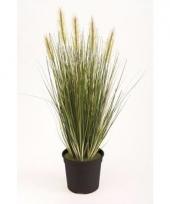 Grasplant nep 55 cm groen in pot