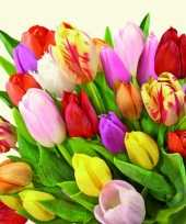 Hollandse tulpen bloemen servetten 60x