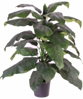 Kamerplant spathiphyllum 120 cm