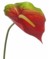 Kunst anthurium 78 cm rood groen