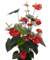 Kunst anthurium rood 80 cm