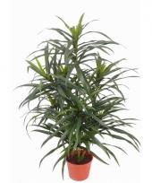 Kunstplant dracaena reflexa anita 73 cm