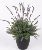Lavendelplant in pot 30 cm