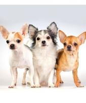 Lunchservetten hondjes 3 laags 20 stuks 10079562