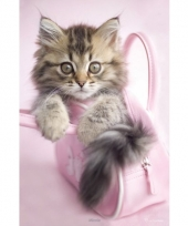 Maine coon poster 61 x 91 5 cm roze