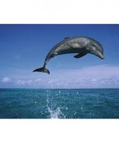 Muur decoratie dolfijnen