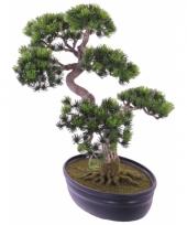 Nep bonsai boompje 40 cm
