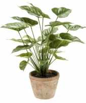 Nep flamingo plant groen in pot 50 cm kunstplant 10143802