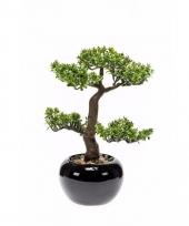 Nep pilea bonsai boompje 34 cm