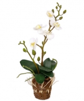 Orchidee kunstplant 32 cm