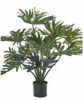Philondendron plant 80 cm