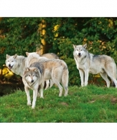 Roofdieren placemat wolf 3d