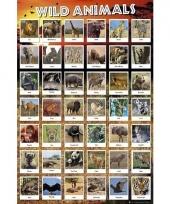 Safaridieren poster 61 x 91 cm