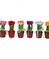 Tafel bloemetje tulpen 18 cm
