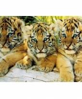Themafeest dieren poster tijger welpjes
