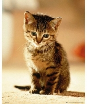 Themafeest kitten poster 40 x 50 cm