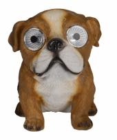 Tuinbeeld engelse bulldog hond met solar verlichting 16 cm