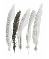 Veertjes zilverfazant 28 cm 5 stuks