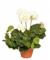 Witte kunst geranium plant 30 cm
