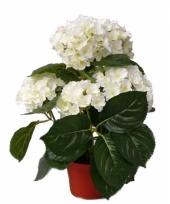 Witte kunst hortensia plant 36 cm